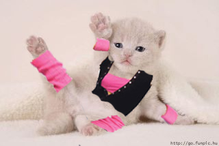 Kitten in a Leotard