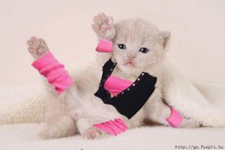 Kitten in a Leotard