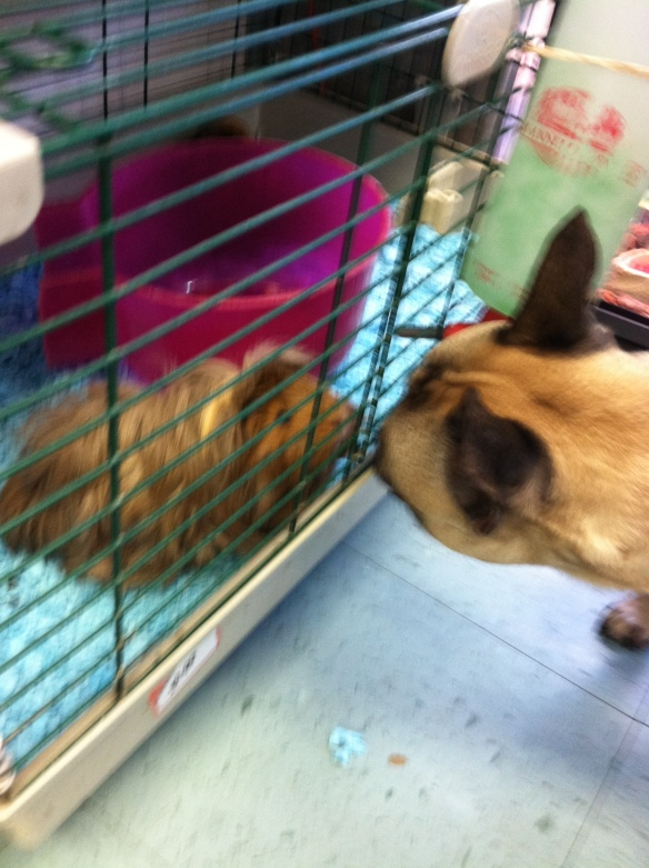 Marshall Meets Guinea Pig